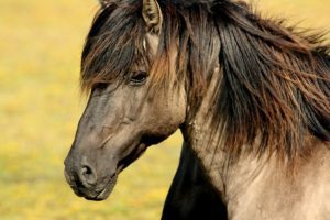 Financial Implications of Owning a Horse