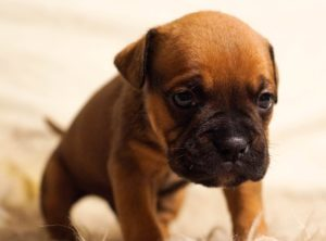 Puppy Training – How to Housebreak a Puppy