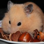 Can I feed my Hamster, Fruit, Veg or Custard Creams?