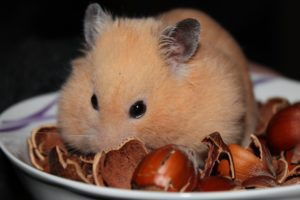 Feeding your Hamster, Fruit, Veg, Custard Creams