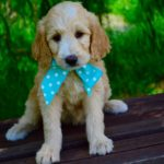Puppy Training – Crate Training Your Puppy with 7 Easy Steps