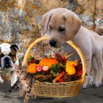 10 Simple Ways You Can Do To Keep Your Pet Healthy