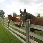 A Guide to Fencing for Your Horse