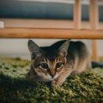 Effective Calming Tips for Stressed and Anxious Cats