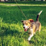 Dog Nutrition: How to Keep Your Pooch Healthy and Fit